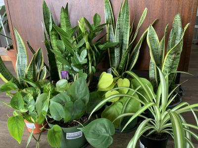 House plants for low light