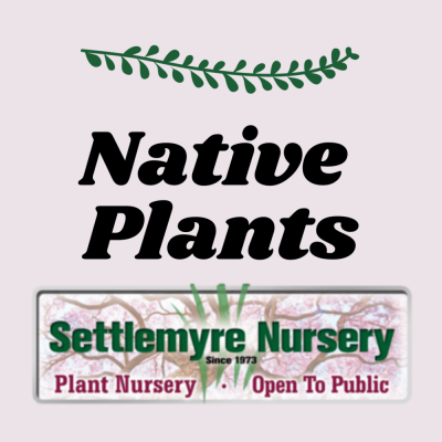 Native Plants are in!